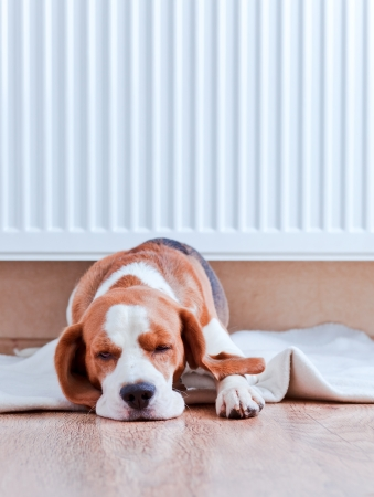 The dog has a rest on wooden to a floor near to a warm radiator photo