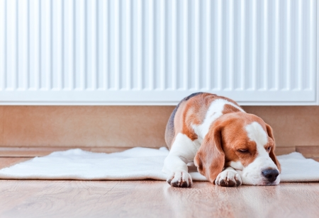 The dog has a rest on wooden to a floor near to a warm radiator