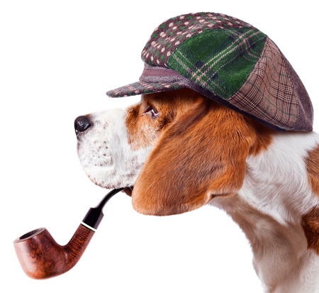 beagle in cap isolated on white background Stock Photo