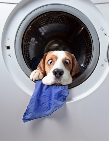 Very delicate washing Stock Photo