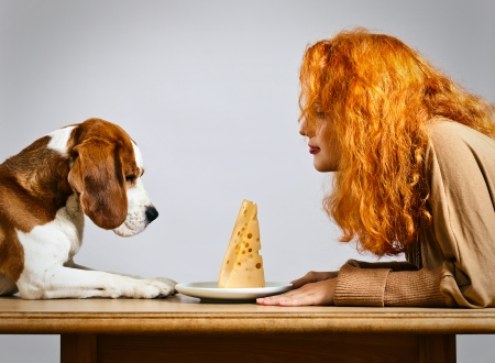 breackfast: girl with cute beagle and  cheese on a white plate