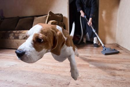Sehr schreckliche Staubsauger, Fokus auf Hund Kopf Standard-Bild - 25076092