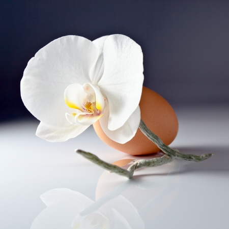 Egg and orchid on white reflexive background   photo