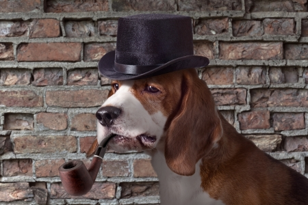 tophat: The hound in  cap is very similar on a detective