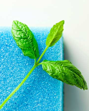 reflexive: blue sponge and leaves of peppermint  on white reflexive  Stock Photo