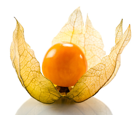 Physalis isolated on a white reflexive background photo