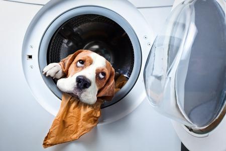 洗濯機で洗濯後の犬 写真素材