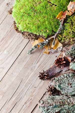 North background with moss and pine cones photo