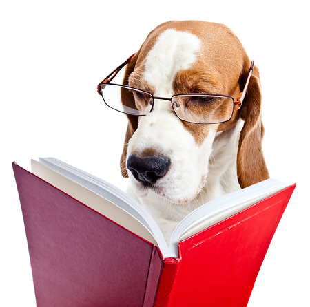 dog in glasses reads the red book , isolated on  white background
