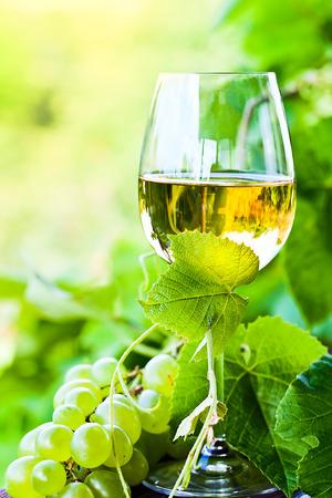 groene druiven en witte wijn in de wijngaard Stockfoto