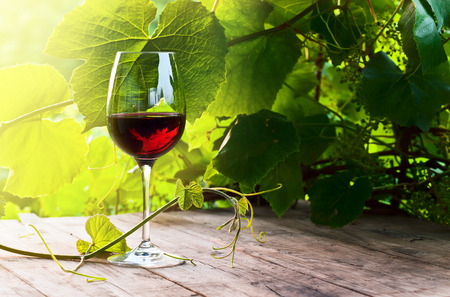 glass with red wine in vineyard on old table