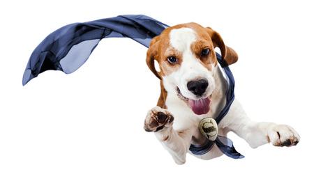犬 - スーパー ヒーロー、白い背景で隔離