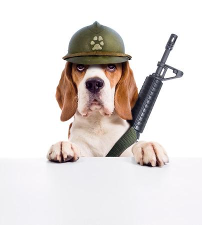 El perro de centinela en un casco, aislado en fondo blanco Foto de archivo