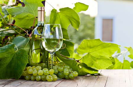 green glass bottle: green grape and white wine in vineyard Stock Photo