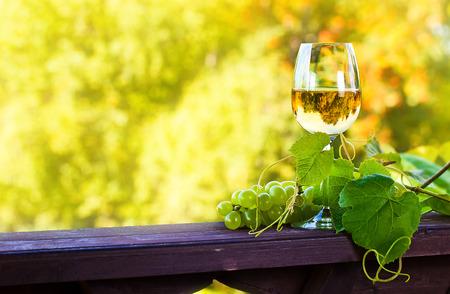 葡萄园里的绿葡萄和甜酒