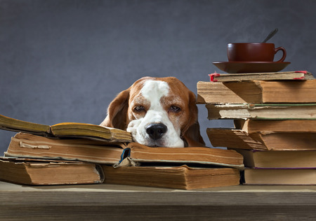 Very smart dog ponders in the library photo