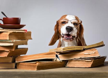estudiando: El perro muy inteligente estudio de libros antiguos