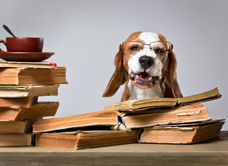 dog school: The very smart dog studying old books