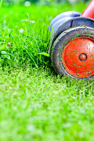 cuttings: the mower mows the grass on the lawn