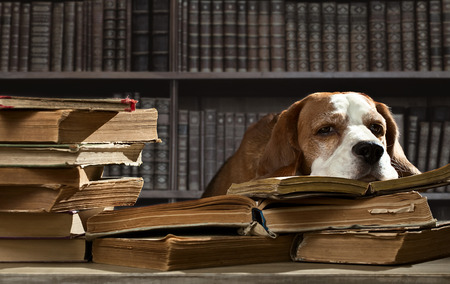 The very smart dog in old  library photo