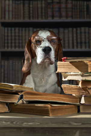 The very smart dog studying old books photo