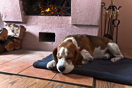 dog resting near to a  warm fireplace