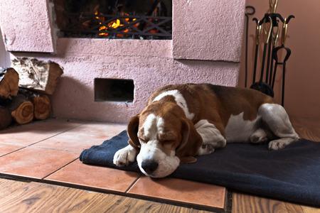 dog resting near to a  warm fireplace