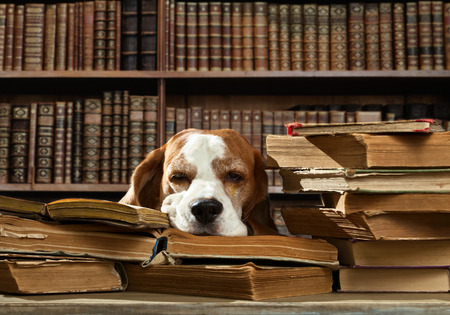 dog school: Very smart dog thinks in the library