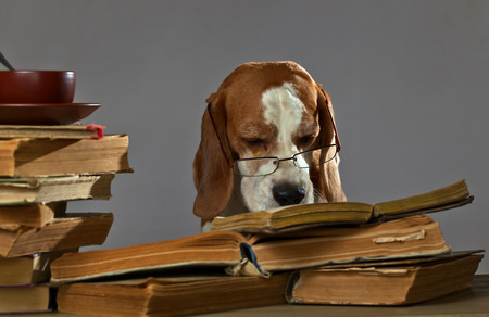 book shelves: The very smart dog studying old books