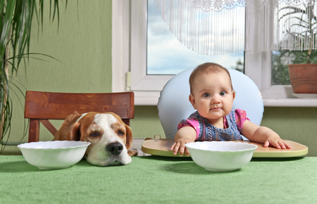 a little dinner: little girl with a dog waiting for dinner
