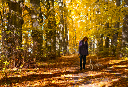 autumn in the park: woman with dog walking in the park