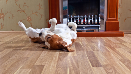 hardwood: resting dog on wooden floor near to a fireplace Stock Photo