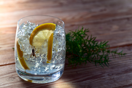 gin: Gin with lemon and juniper branch on old wooden table