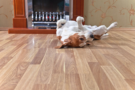 resting dog on wooden floor near to a fireplace Stock Photo