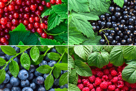 Collage of ripe juicy berries with leaves .