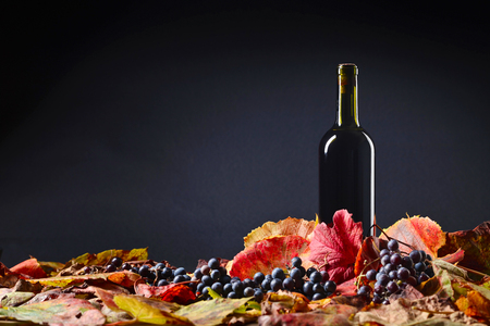 Red wine bottle and dry vine leaves , wine tasting and autumn concept. Black background , copy space . Stock Photo
