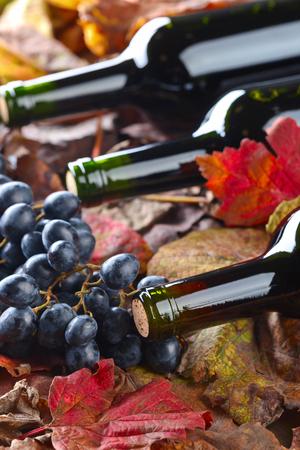 레드 와인 병, 포도 및 마른 포도 나무 잎. 스톡 콘텐츠