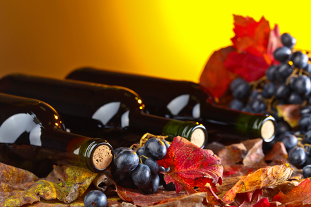 Red wine bottles , grapes and dry vine leaves . Stock Photo