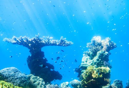 Underwater scene. Coral reef,  and sunny sky shining through clean ocean water. Red sea , Israel. Stock Photo