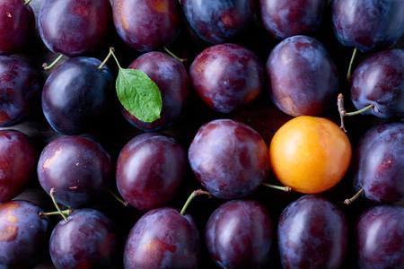 Ripe juicy plums as background. Top view. Banco de Imagens