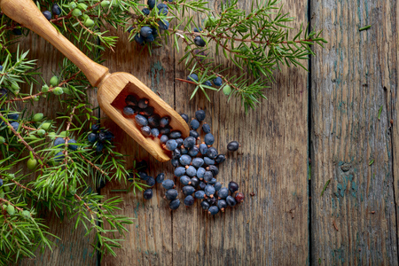 Juniper branch and wooden spoon with blue juniper berries on a wooden background. Top view, copy space for your text.