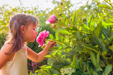 Sunny summer day in the garden after rain. Happy little girl smelling fragrant pink peonies.