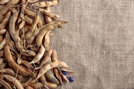 Dry bean pods with beans on the burlap . Top view, copy space for your text.