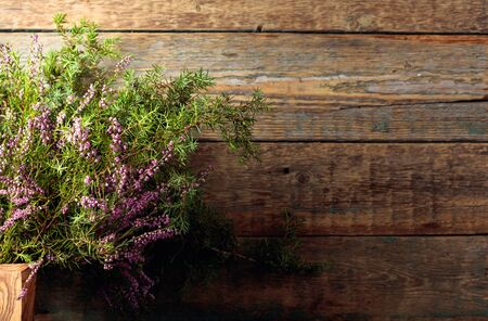 Blooming heather and juniper branch with berries on a old wooden background. Concept nordic ecological background. Copy space.