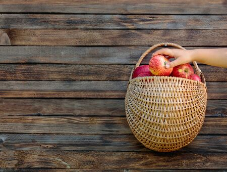 Basket with apples on a wooden fence and a childs hand taking an apple. Copy space.