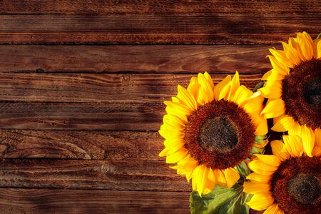 Blooming sunflowers on a rustic wooden background, overhead view. Greeting card in vintage style. Copy space.