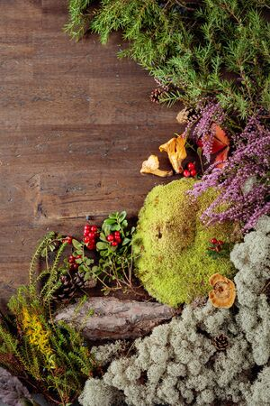 Old wooden background with different Northern plants and berries. Conceptual image on the theme of ecological tourism. Copy space.