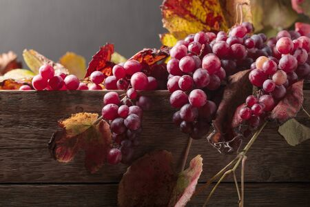 Bunches of ripe red grapes with grape leaves.