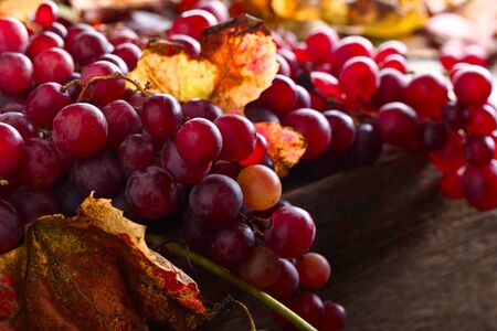 Bunches of ripe red grapes with vine leaves.