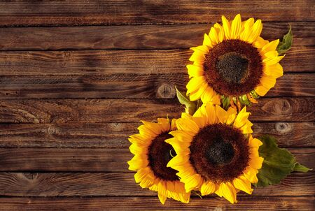 Blooming sunflowers on a rustic wooden background, top view. Copy space. Zdjęcie Seryjne